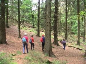 Yoga und Wandern in Bad Meinberg