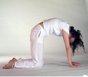Yoga - Katze