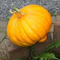 Unser Big Pumpkin!
