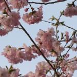 Blütensegen