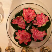 5 Lotusse