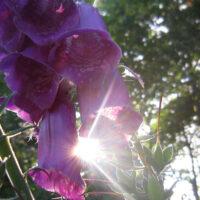 Blumen-Sonne