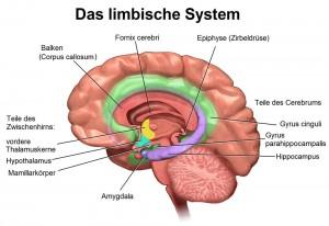 Das Limbisches System
