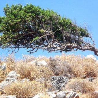 Welche Asana könnte das wohl sein? Der Baum!