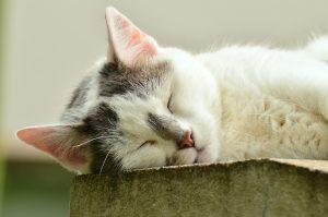 Katze Schlaf
