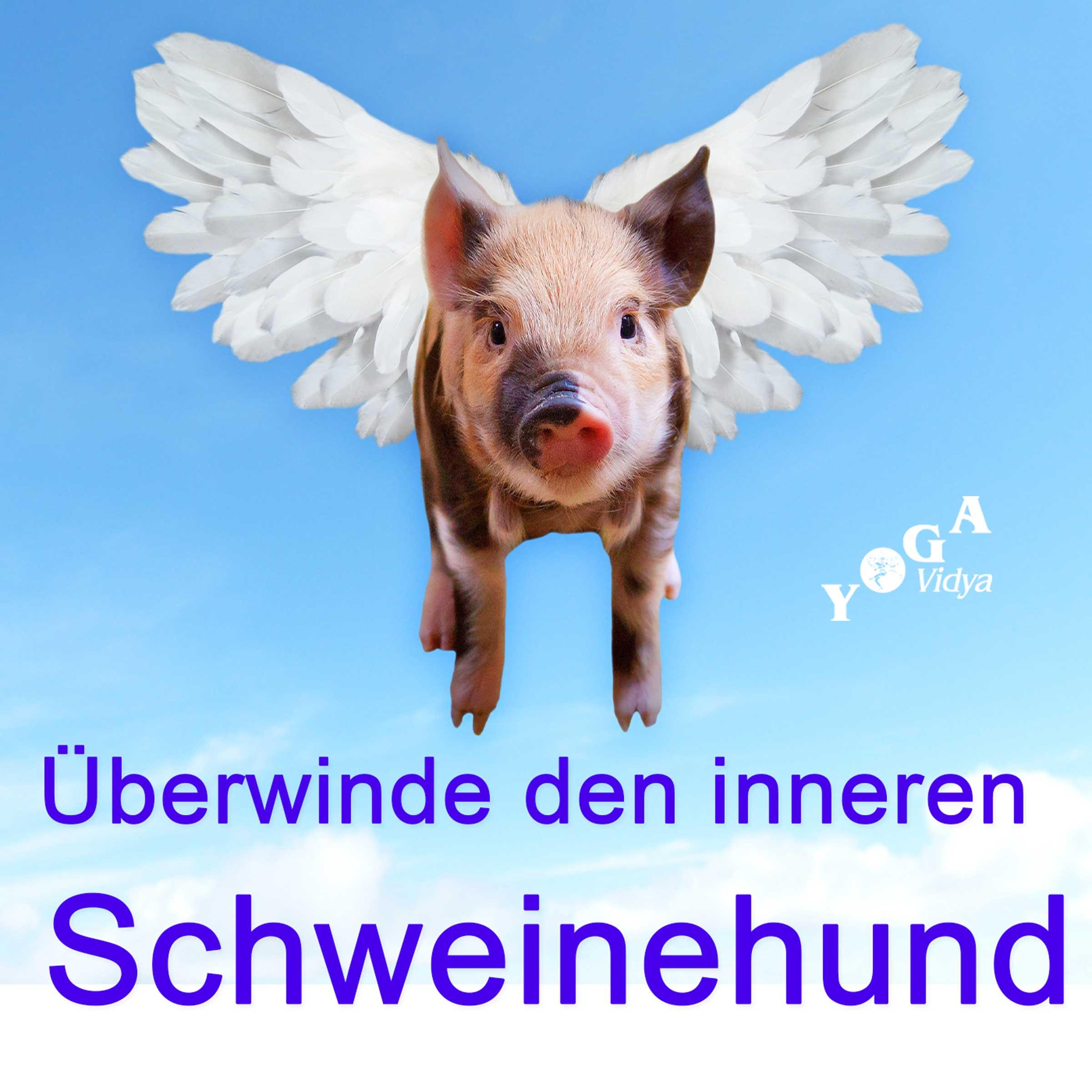 überwinde deinen inneren schweinehund