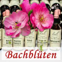 Bachblüten Podcast
