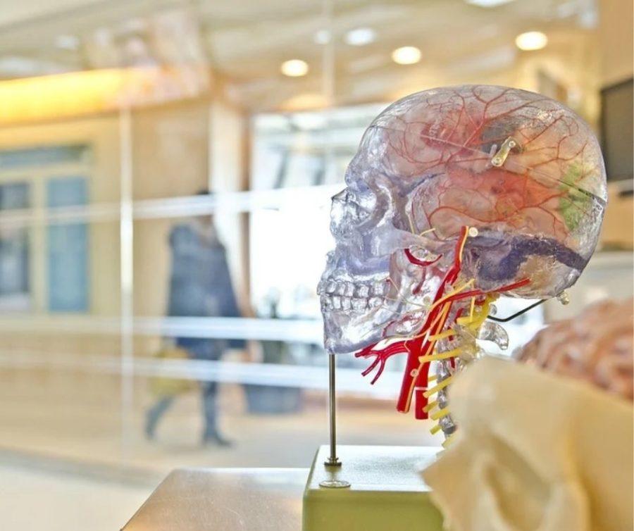 Neurologisch gesehen wirkt Lob und Tadel auf unseren Gyrus parahippocampalis