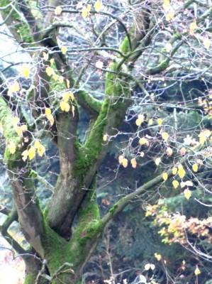 2013  November Liebes Bäume