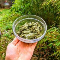 Grünes Pesto eignet sich hervorragend für Gartenpartys oder Nudeln